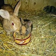For halvvuxna om kaniner som kanner mycket
